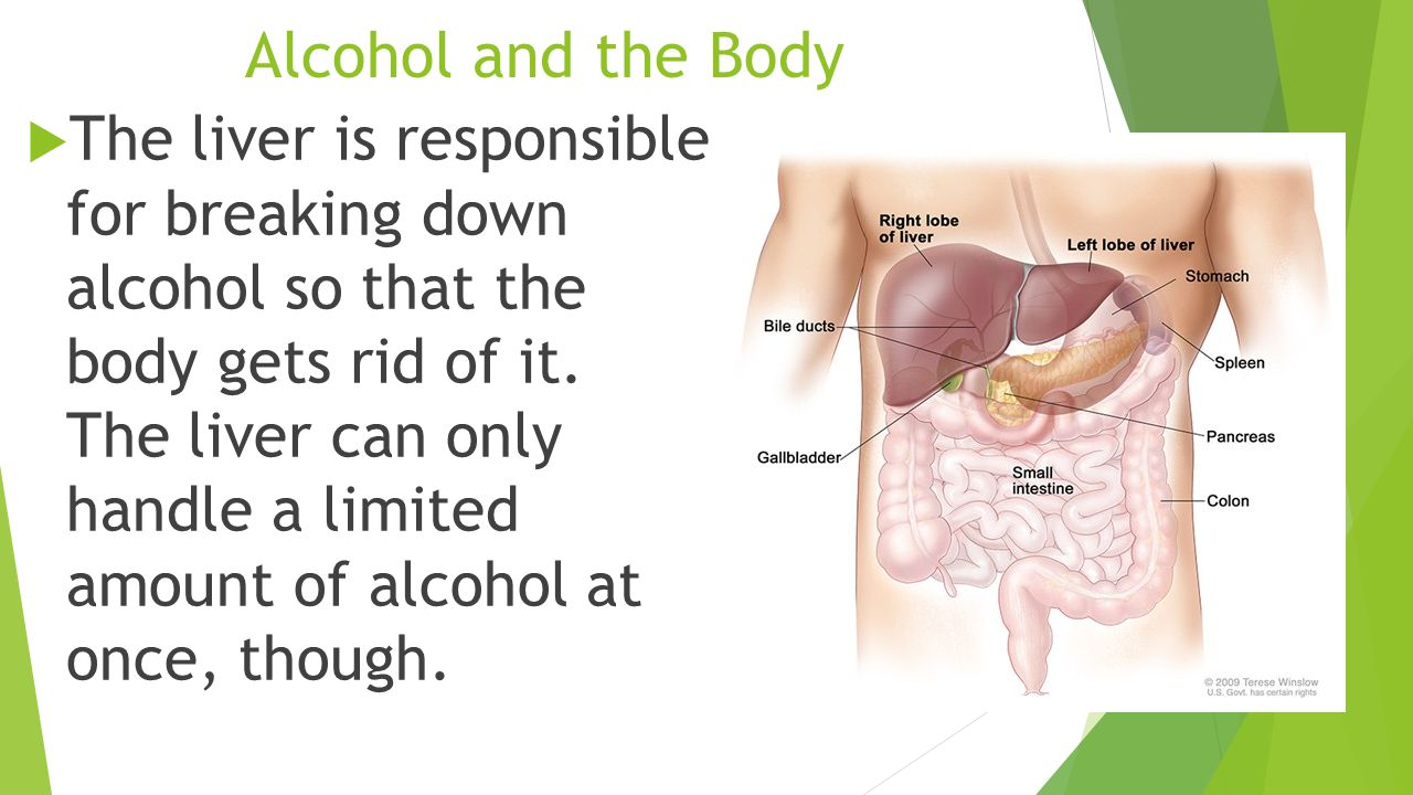 Alcohol and the Body  The liver is responsible for breaking down alcohol so that the body gets rid of it.