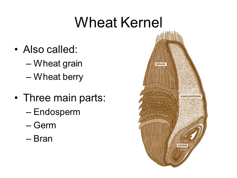 Day 4 Wheat Flour milling Grains  Words, Phrases, and