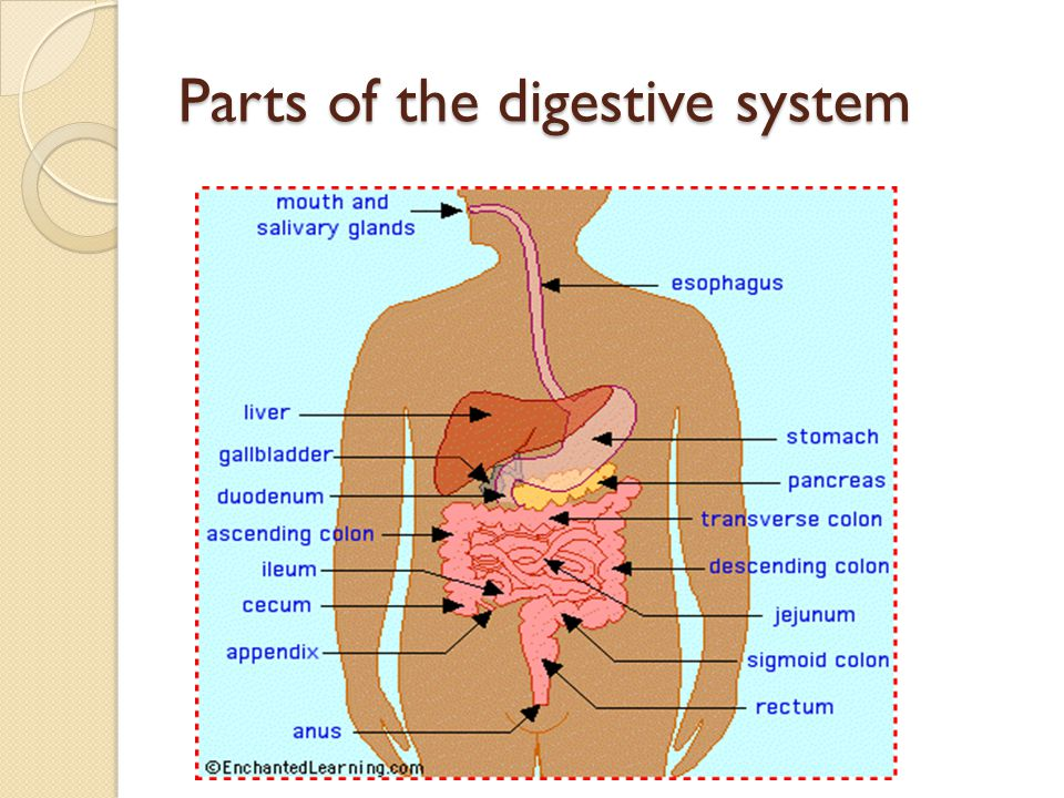 The digestive system Anatomy and Physiology Lecturer:Mrs. Reid-Brown ...