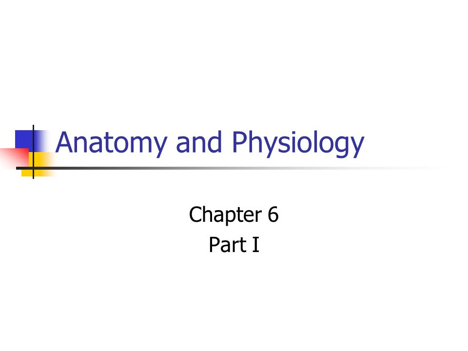 Anatomy And Physiology Chapter 6 Part I Why Study Anatomy