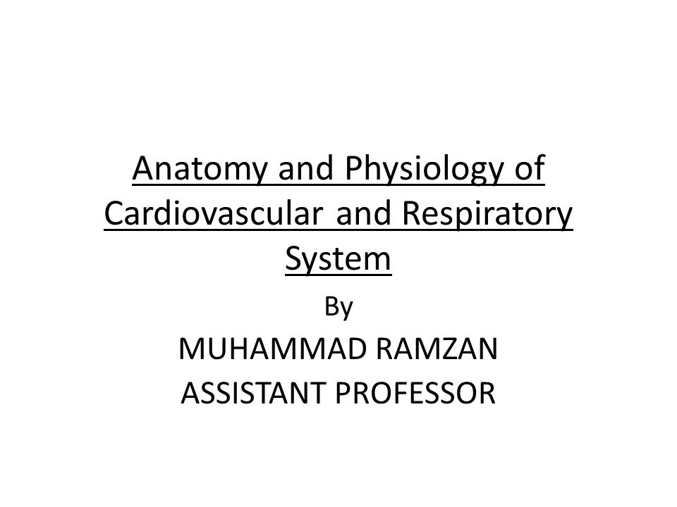 Anatomy and Physiology of Cardiovascular and Respiratory System By MUHAMMAD RAMZAN ASSISTANT PROFESSOR