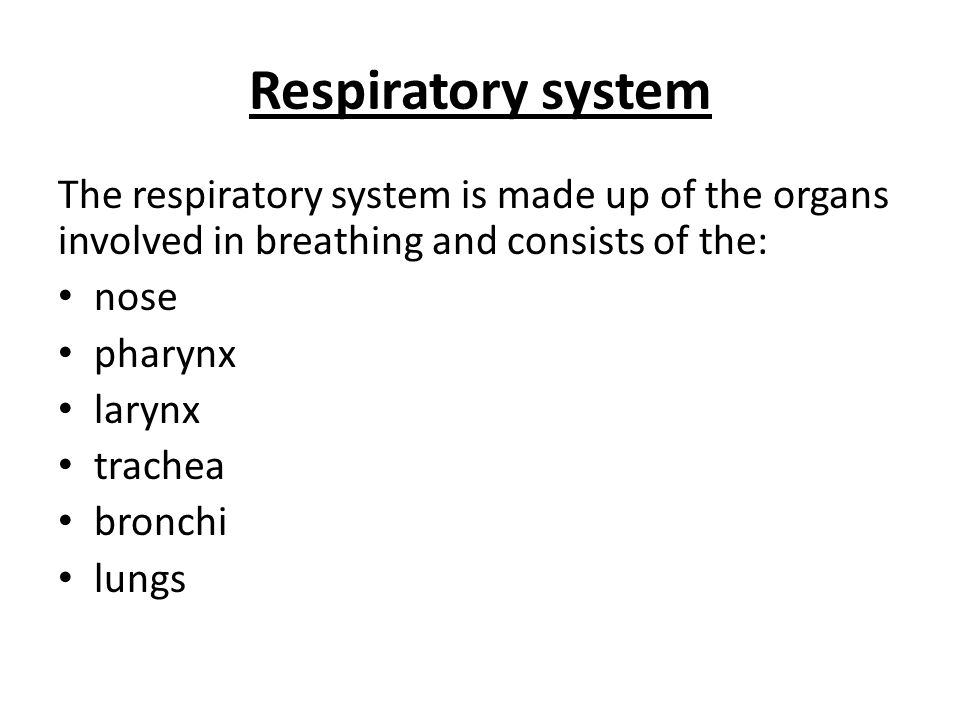 The respiratory system is made up of the organs involved in breathing and consists of the: nose pharynx larynx trachea bronchi lungs Respiratory system