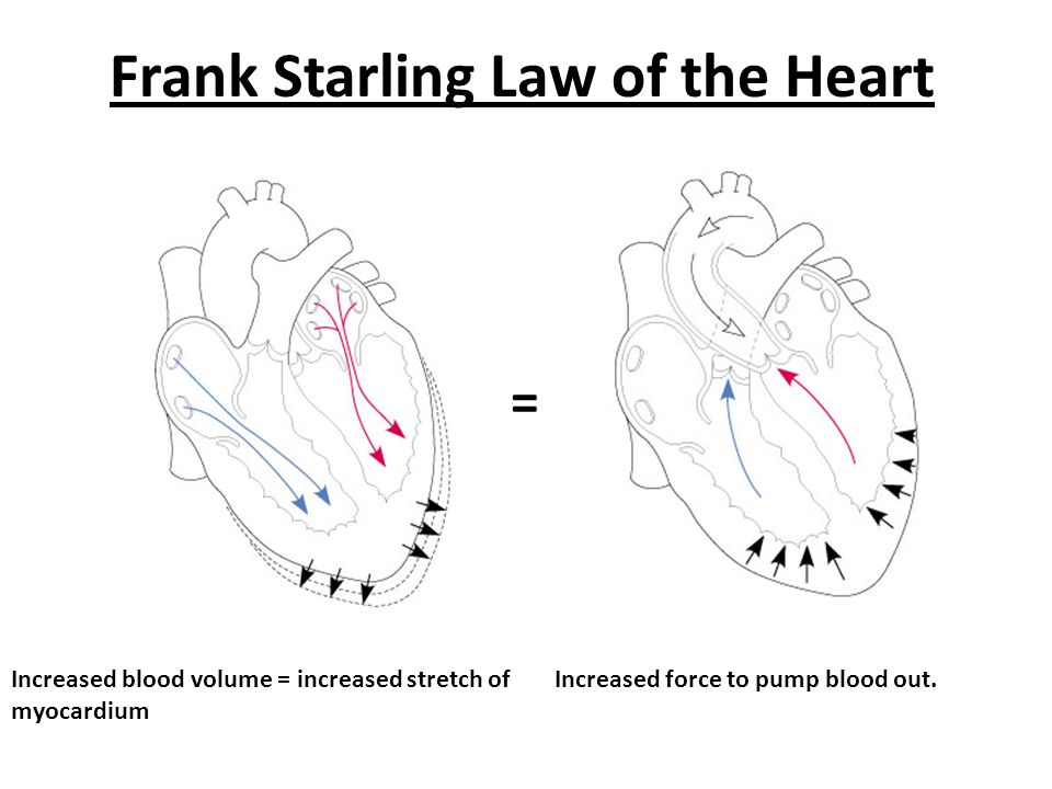 Frank Starling Law of the Heart Increased blood volume = increased stretch of myocardium = Increased force to pump blood out.