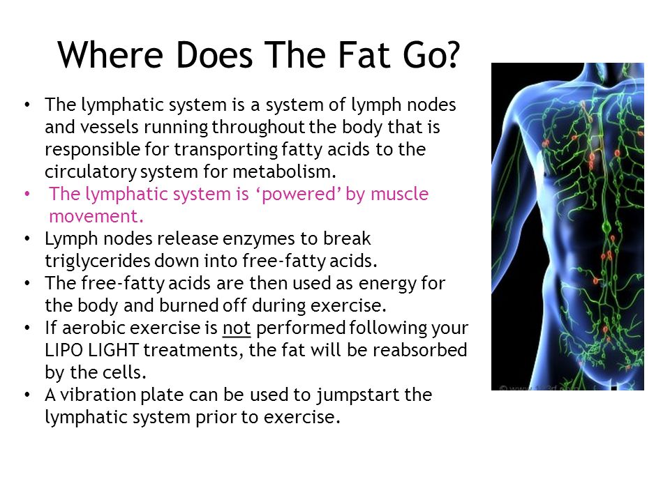 What Is LIPO LIGHT. 4 The ...