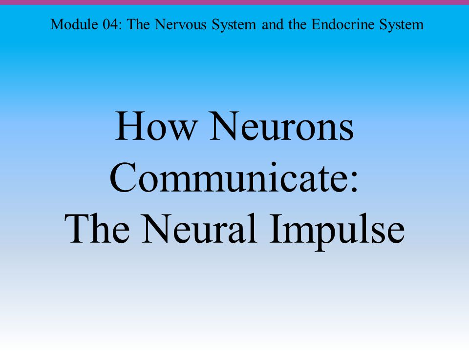 How Neurons Communicate: The Neural Impulse Module 04: The Nervous System and the Endocrine System