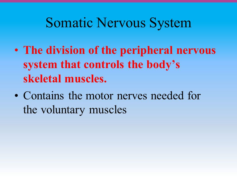 Somatic Nervous System The division of the peripheral nervous system that controls the body's skeletal muscles.