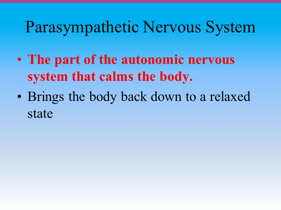 Parasympathetic Nervous System The part of the autonomic nervous system that calms the body.