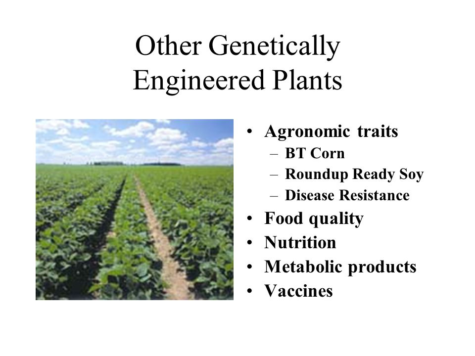 Other Genetically Engineered Plants Agronomic traits –BT Corn –Roundup Ready Soy –Disease Resistance Food quality Nutrition Metabolic products Vaccines