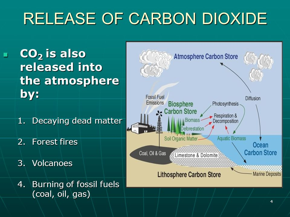 4 RELEASE OF CARBON DIOXIDE CO 2 is also released into the atmosphere by: CO 2 is also released into the atmosphere by: 1.Decaying dead matter 2.Forest fires 3.Volcanoes 4.Burning of fossil fuels (coal, oil, gas)