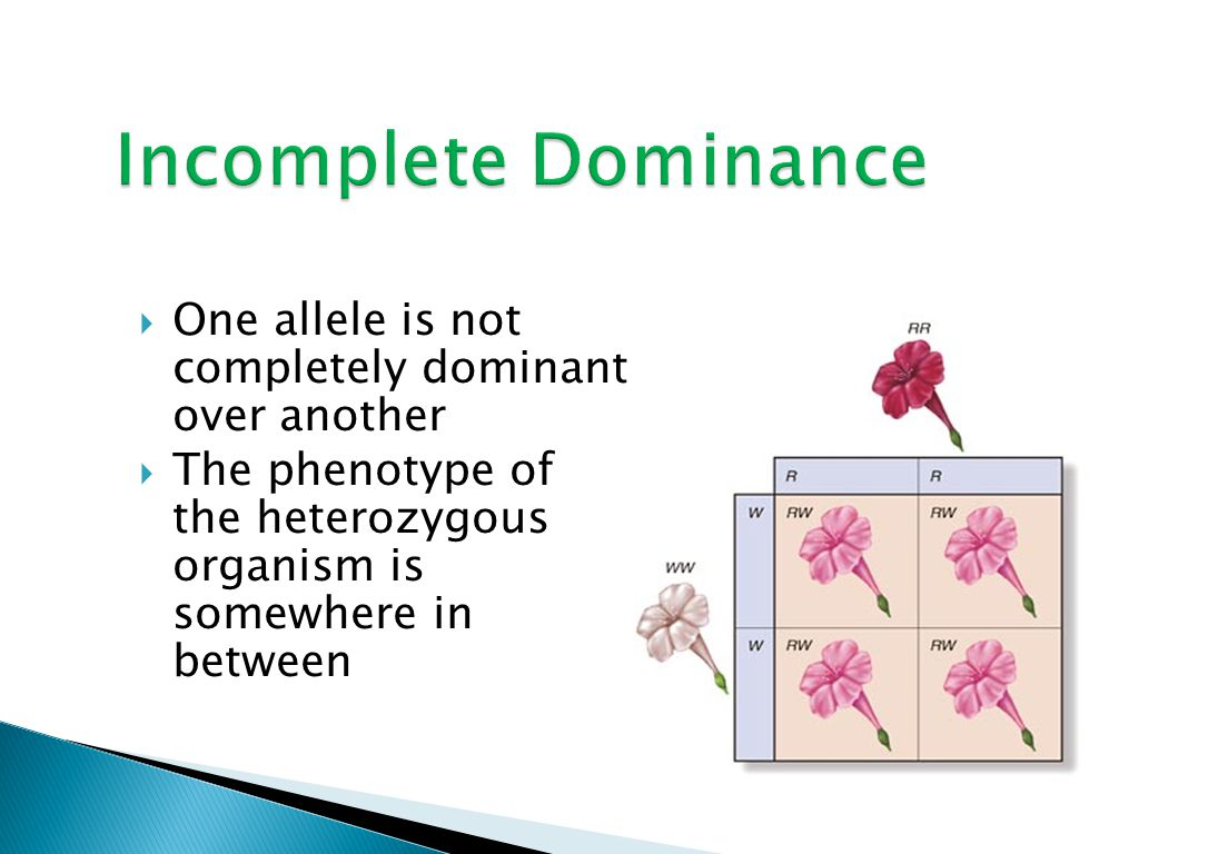  One allele is not completely dominant over another  The phenotype of the heterozygous organism is somewhere in between