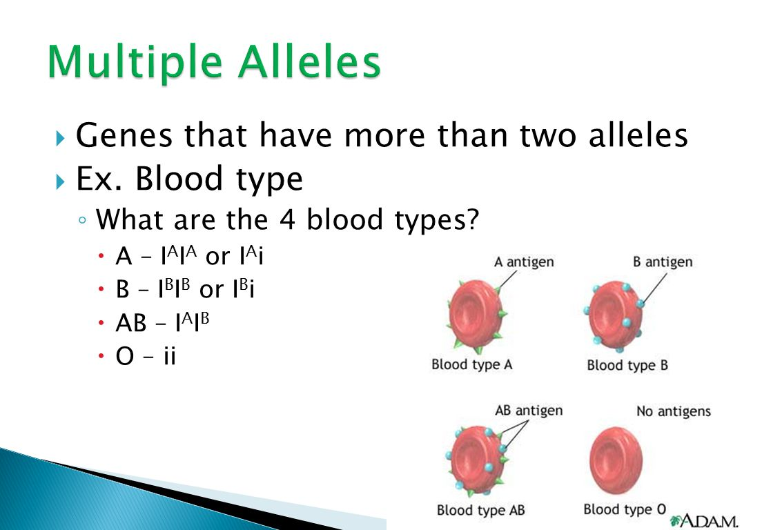  Genes that have more than two alleles  Ex. Blood type ◦ What are the 4 blood types.