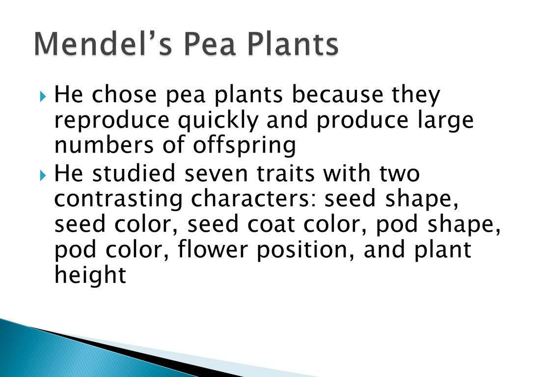  He chose pea plants because they reproduce quickly and produce large numbers of offspring  He studied seven traits with two contrasting characters: seed shape, seed color, seed coat color, pod shape, pod color, flower position, and plant height
