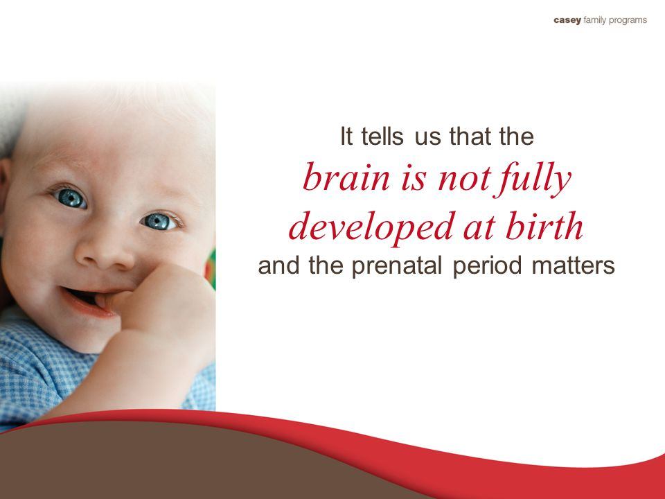 It tells us that the brain is not fully developed at birth and the prenatal period matters