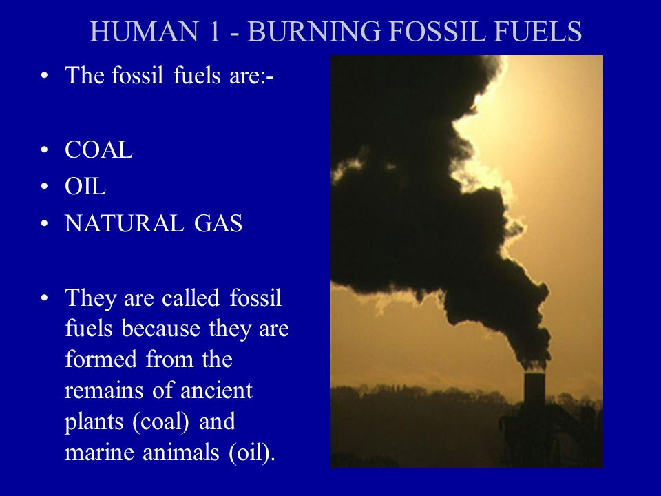 HUMAN 1 - BURNING FOSSIL FUELS The fossil fuels are:- COAL OIL NATURAL GAS They are called fossil fuels because they are formed from the remains of ancient plants (coal) and marine animals (oil).