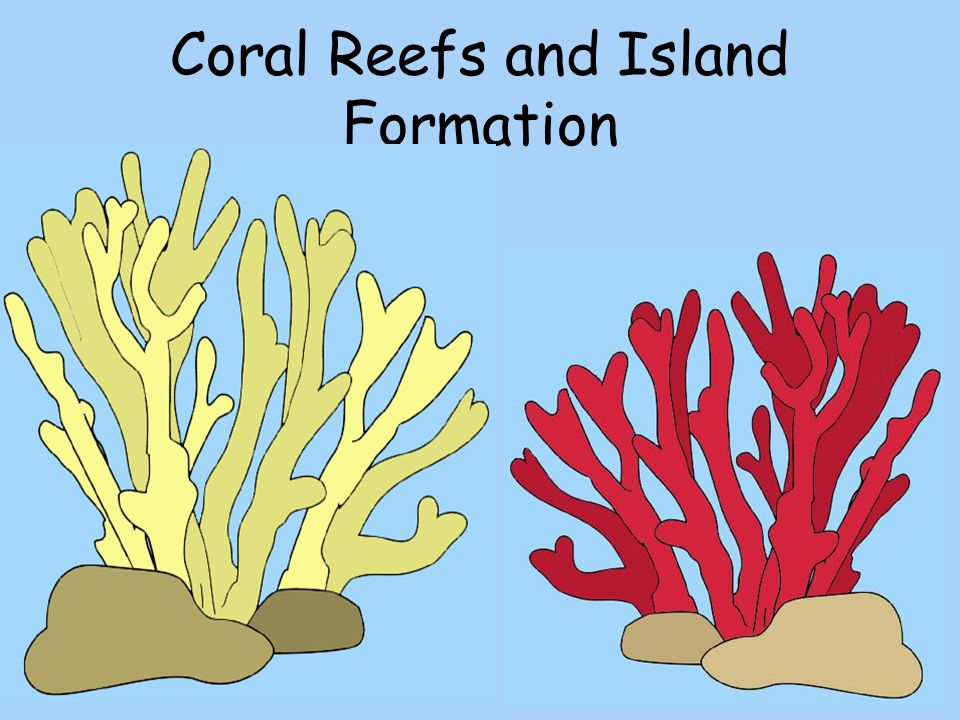 Coral Reefs and Island Formation