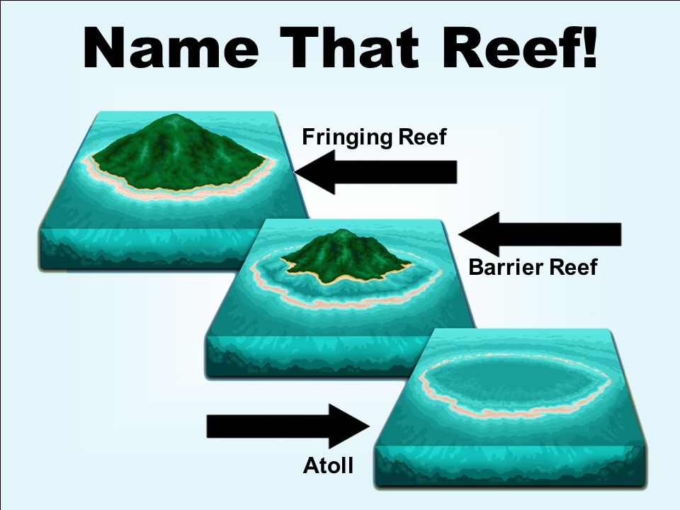 Fringing Reef Barrier Reef Atoll