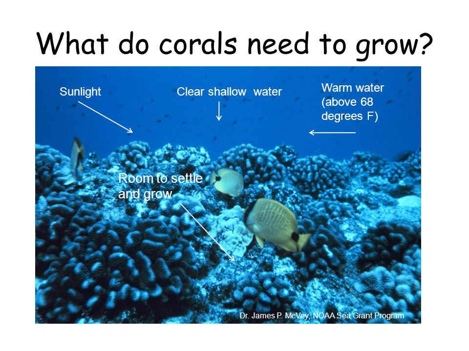What do corals need to grow. Dr. James P.