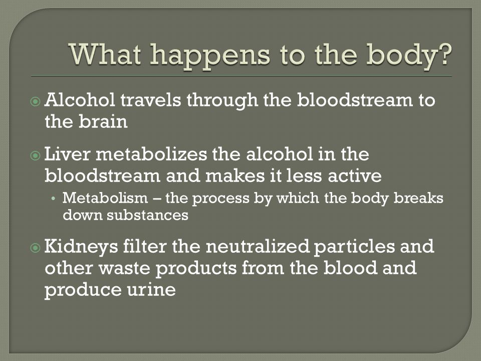  Alcohol travels through the bloodstream to the brain  Liver metabolizes the alcohol in the bloodstream and makes it less active Metabolism – the process by which the body breaks down substances  Kidneys filter the neutralized particles and other waste products from the blood and produce urine