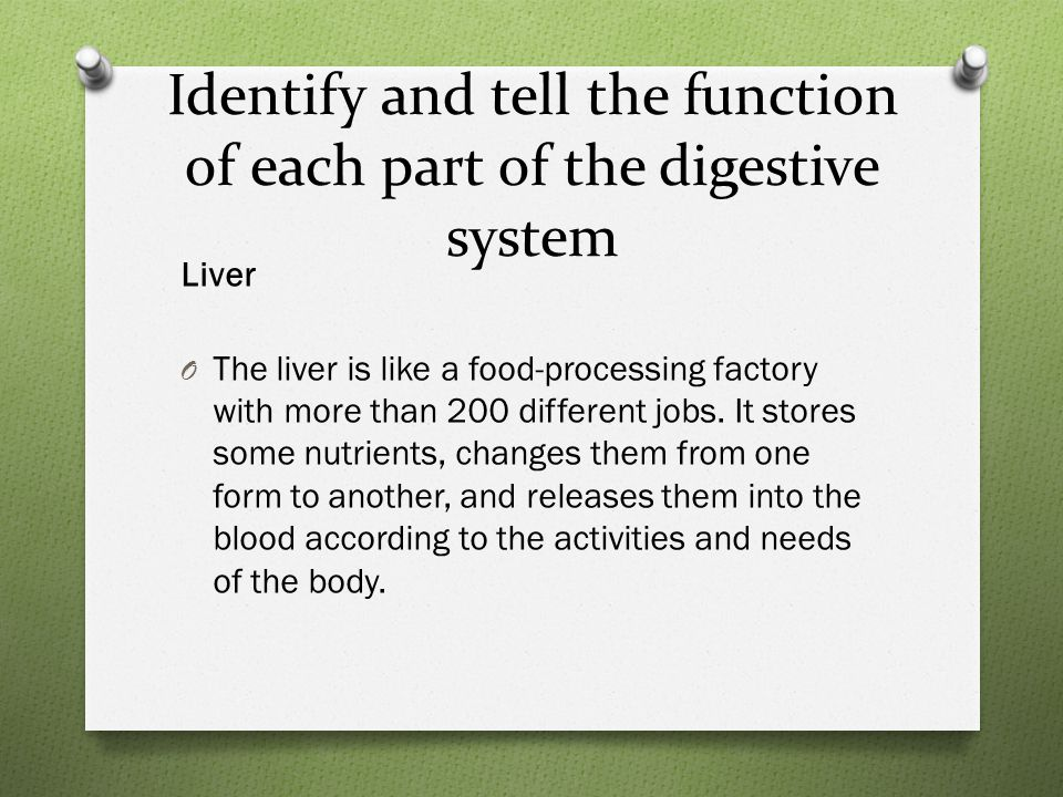 Identify and tell the function of each part of the digestive system Liver O The liver is like a food-processing factory with more than 200 different jobs.