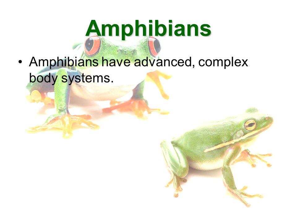 Amphibians Frogs. Anatomy Vocabulary Body SystemsBody Systems ...