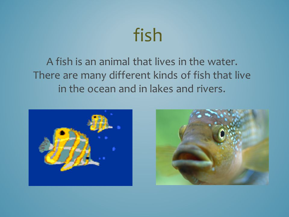 Important words the three little fish and the big bad shark ppt 3 fish publicscrutiny Image collections