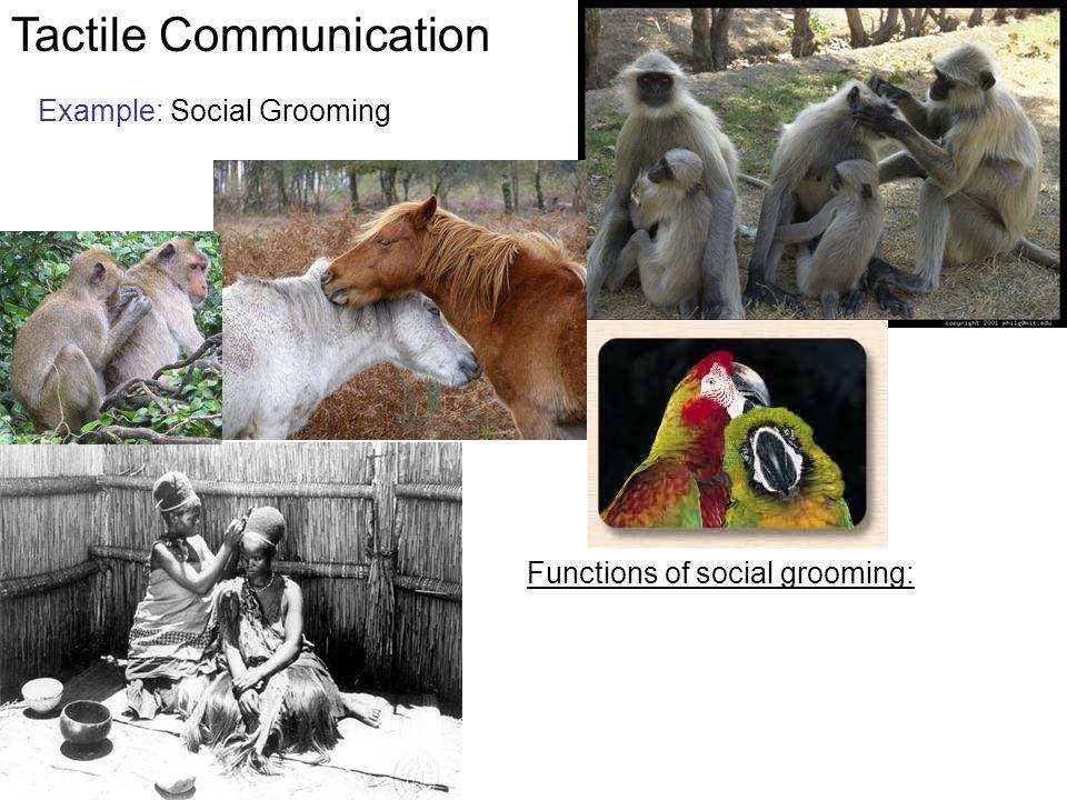 Animal communication.