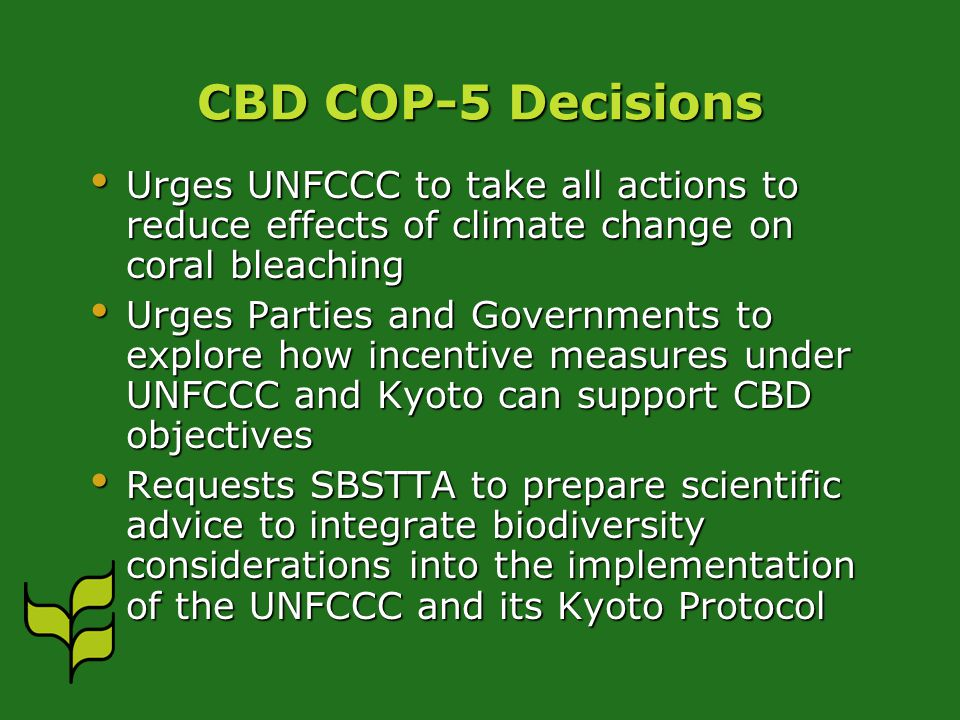 CBD COP-5 Decisions Urges UNFCCC to take all actions to reduce effects of climate change on coral bleaching Urges UNFCCC to take all actions to reduce effects of climate change on coral bleaching Urges Parties and Governments to explore how incentive measures under UNFCCC and Kyoto can support CBD objectives Urges Parties and Governments to explore how incentive measures under UNFCCC and Kyoto can support CBD objectives Requests SBSTTA to prepare scientific advice to integrate biodiversity considerations into the implementation of the UNFCCC and its Kyoto Protocol Requests SBSTTA to prepare scientific advice to integrate biodiversity considerations into the implementation of the UNFCCC and its Kyoto Protocol