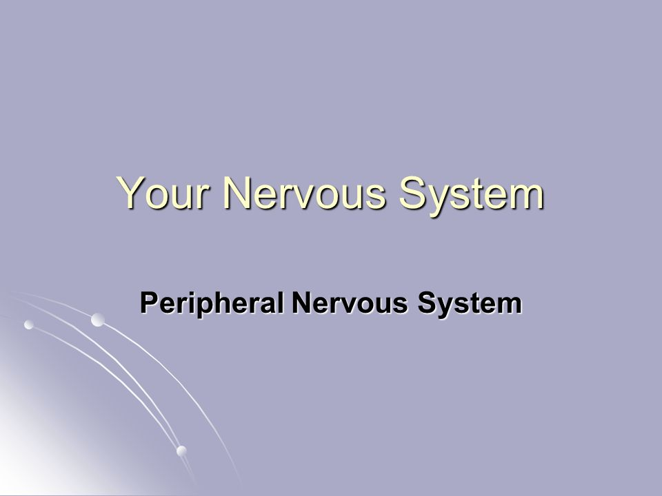 Your Nervous System Peripheral Nervous System
