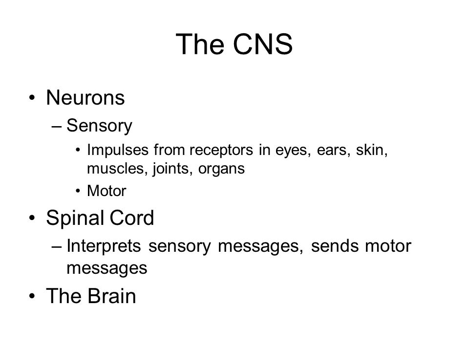 The CNS Neurons –Sensory Impulses from receptors in eyes, ears, skin, muscles, joints, organs Motor Spinal Cord –Interprets sensory messages, sends motor messages The Brain