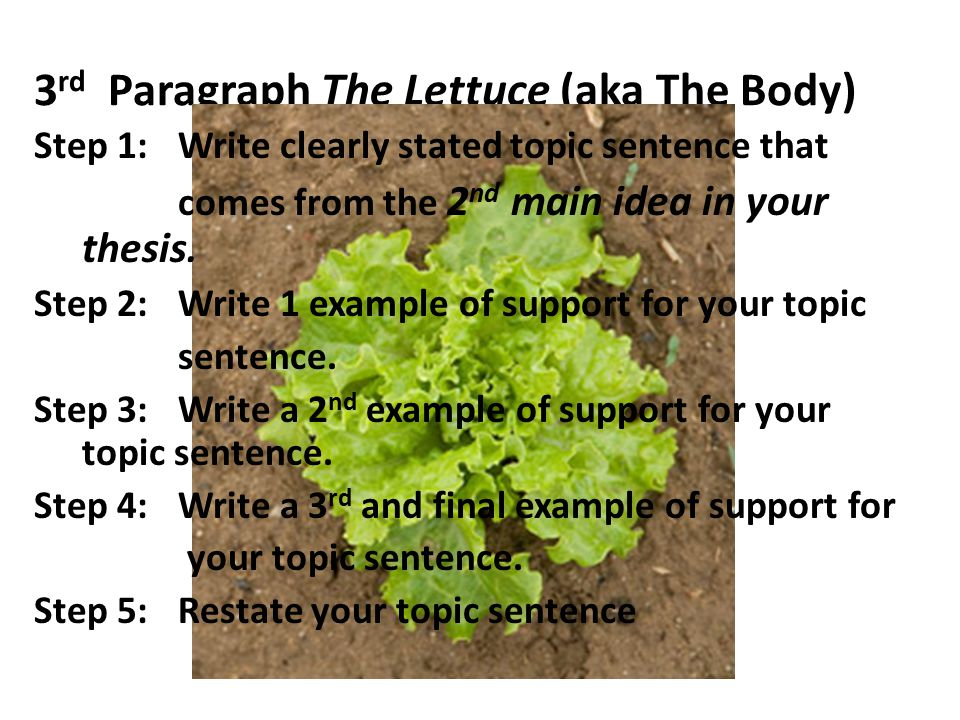 3 rd Paragraph The Lettuce (aka The Body) Step 1:Write clearly stated topic sentence that comes from the 2 nd main idea in your thesis.