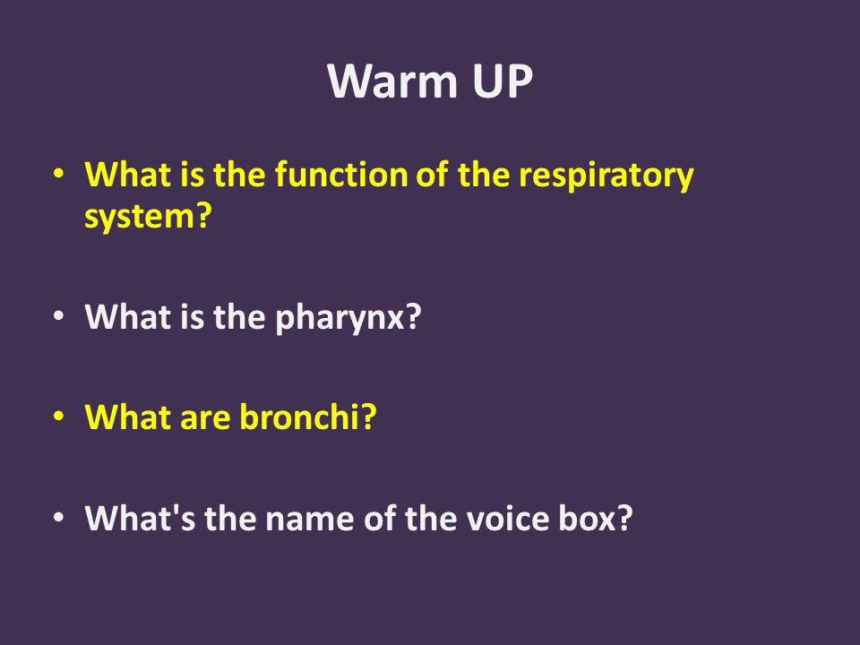Warm UP What is the function of the respiratory system.