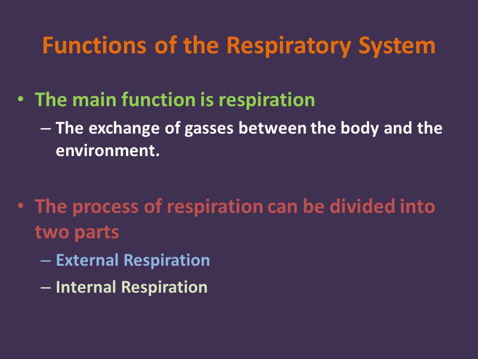 Functions of the Respiratory System The main function is respiration – The exchange of gasses between the body and the environment.
