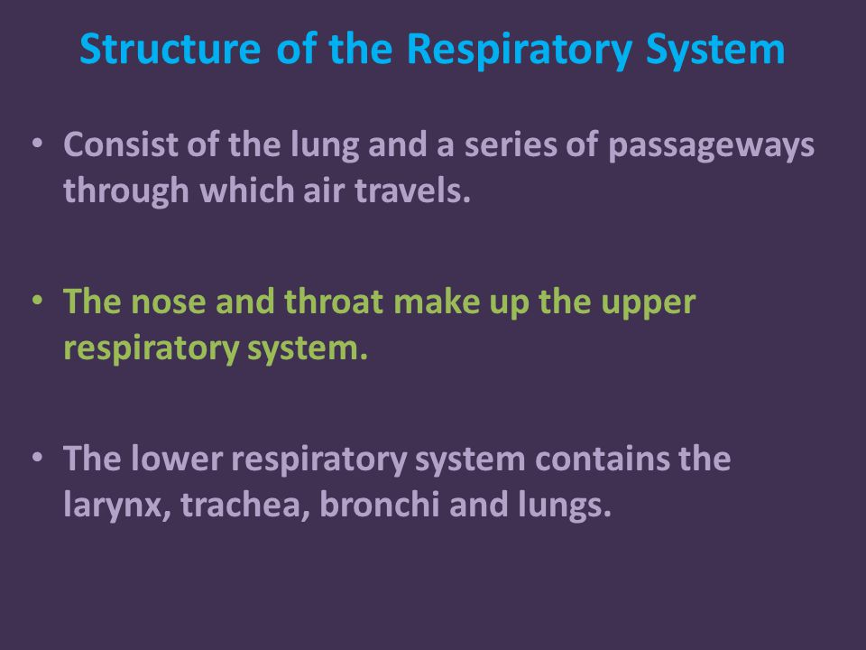Structure of the Respiratory System Consist of the lung and a series of passageways through which air travels.