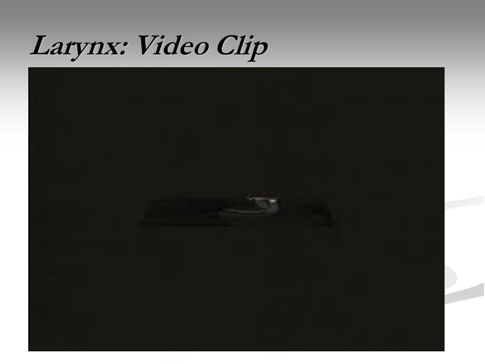 Larynx: Video Clip