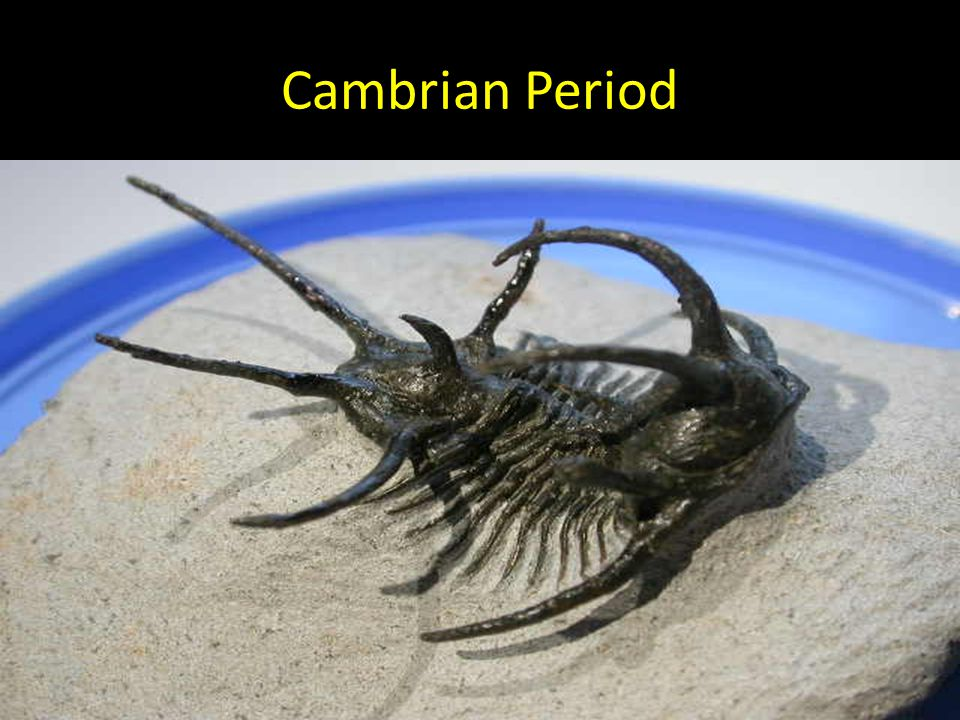 why was the cambrian explosion important