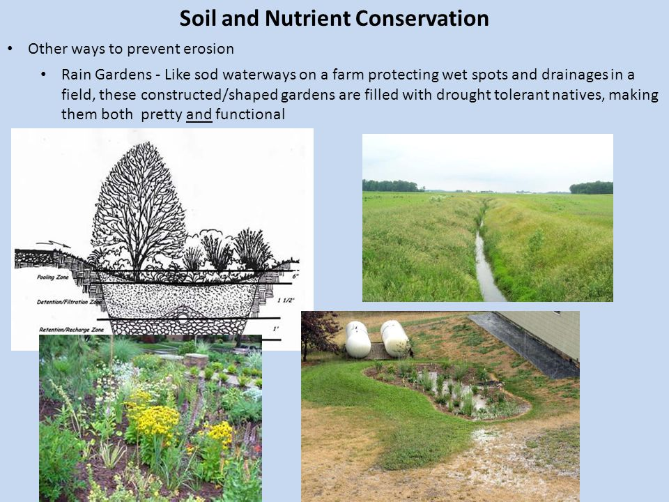 Soil and Nutrient Conservation Other ways to prevent erosion Rain Gardens - Like sod waterways on a farm protecting wet spots and drainages in a field, these constructed/shaped gardens are filled with drought tolerant natives, making them both pretty and functional