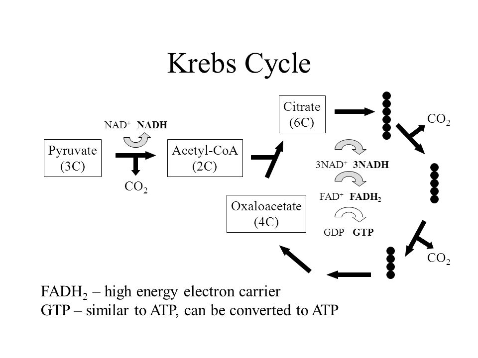 Krebs Cycle Pyruvate (3C) NAD + NADH Citrate (6C) CO 2 Acetyl-CoA (2C) Oxaloacetate (4C) CO 2 3NAD + 3NADH FAD + FADH 2 GDP GTP FADH 2 – high energy electron carrier GTP – similar to ATP, can be converted to ATP