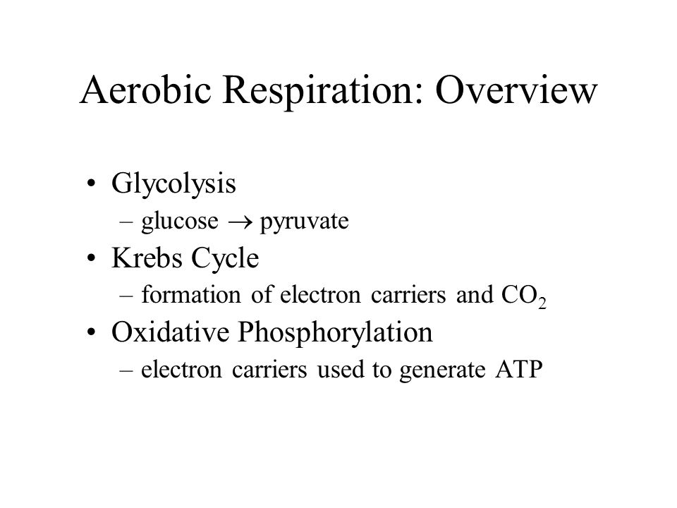 Aerobic Respiration: Overview Glycolysis –glucose  pyruvate Krebs Cycle –formation of electron carriers and CO 2 Oxidative Phosphorylation –electron carriers used to generate ATP