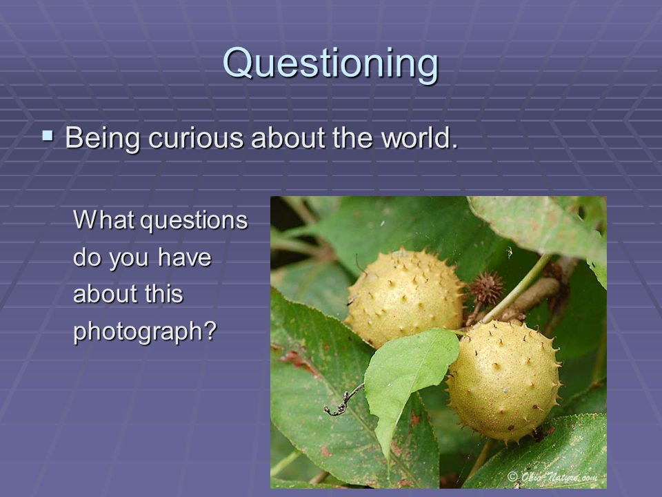Questioning  Being curious about the world. What questions do you have about this photograph