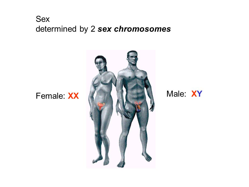 Relationships Between Vertebrate Zw And Xy Sex Chromosome Systems
