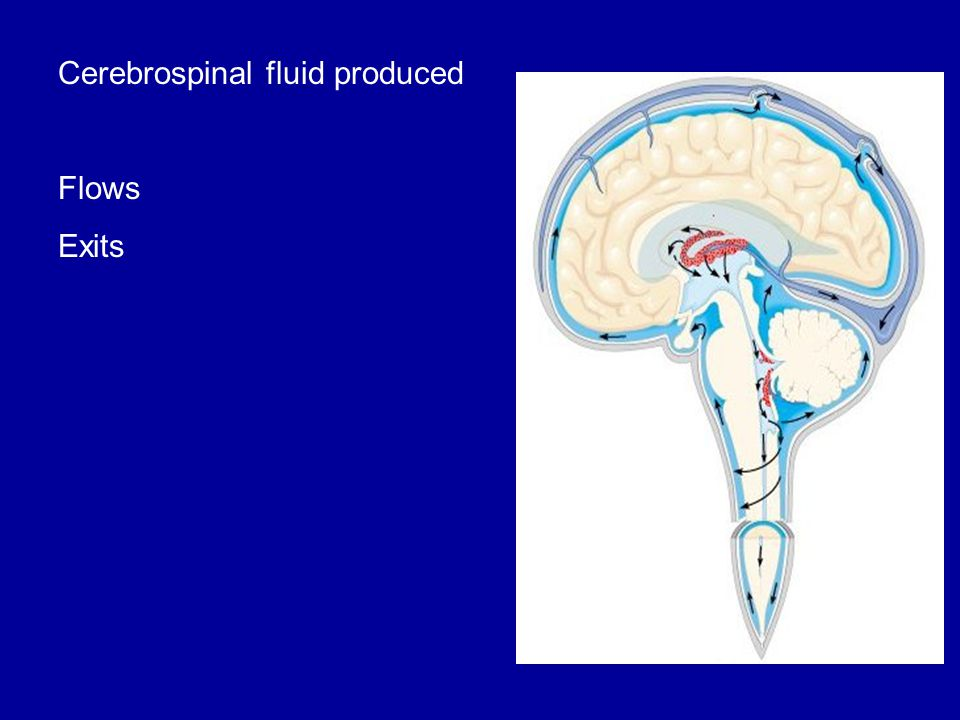 Cerebrospinal fluid produced Flows Exits