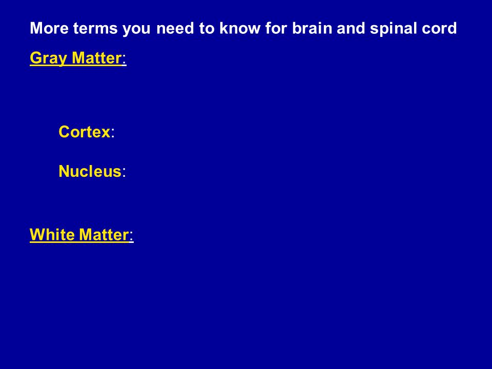 More terms you need to know for brain and spinal cord Gray Matter: White Matter: Cortex: Nucleus: