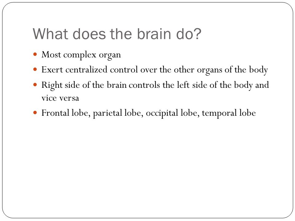 What does the brain do.