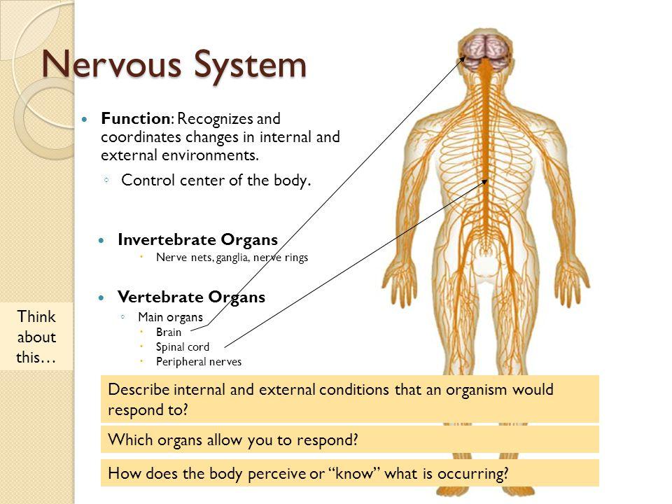 Comparative Anatomy Animal Body Systems Nervous System Aisd Ppt