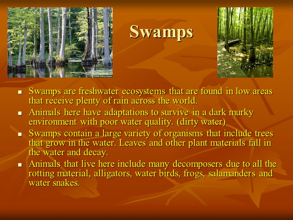 Swamps Swamps are freshwater ecosystems that are found in low areas that receive plenty of rain across the world.