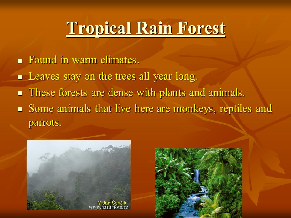 Tropical Rain Forest Tropical Rain Forest Found in warm climates.