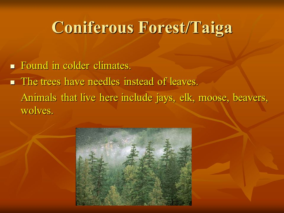 Coniferous Forest/Taiga Found in colder climates. Found in colder climates.