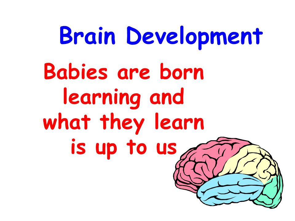 Brain Development Babies are born learning and what they learn is up to us