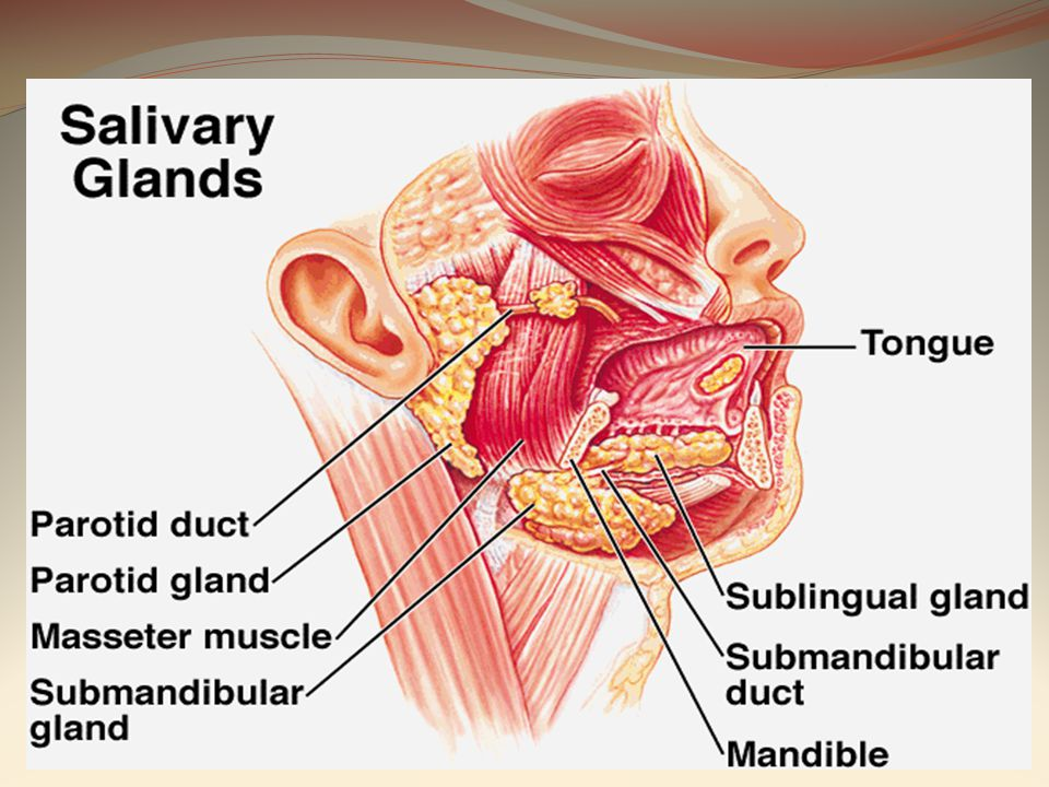SALIVARY GLAND DISEASES - ppt video online download
