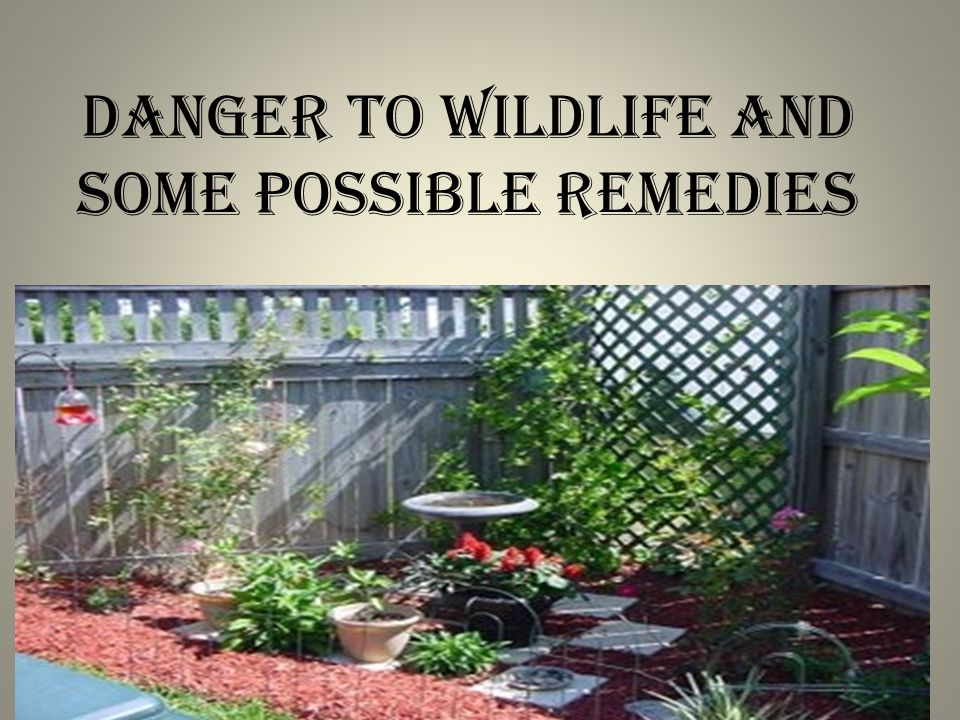 DANGER TO WILDLIFE AND SOME POSSIBLE REMEDIES
